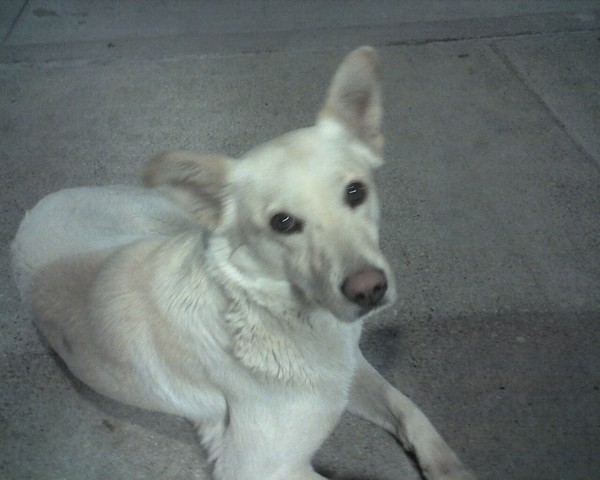 A Dallas Stray the night before I caught her