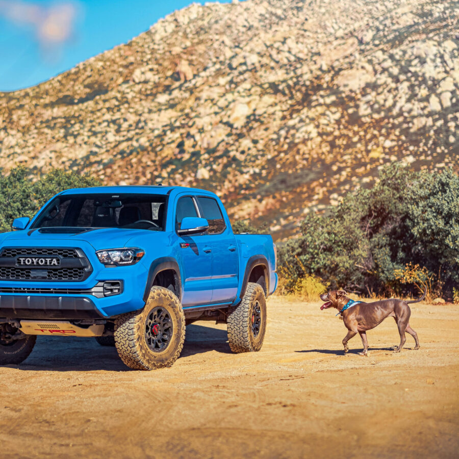 Brown dog walking towards blue truck parked on dusty ground near a hill