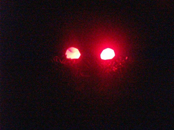 Decoración para Halloween casera: arbustos con ojos