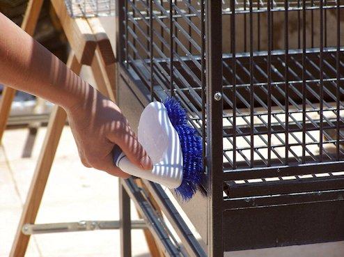 Limpieza jaula de aves