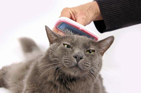 Polvos de talco para el pelo del gato