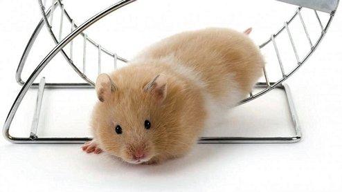Divertidos hamsters
