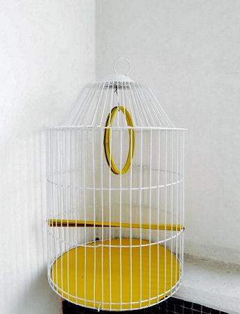 Juegos en jaula