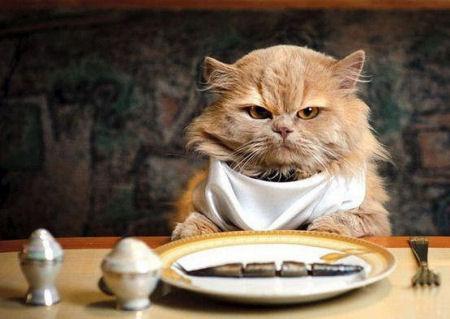 Comida de gatos