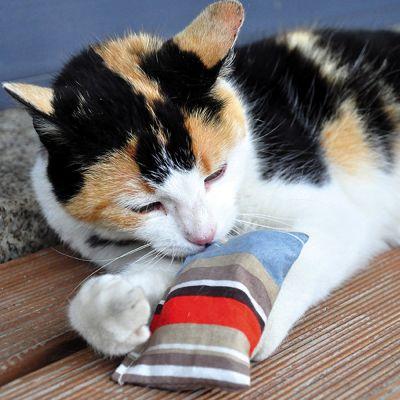 Gatos y valeriana