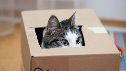 Diversión para gatito