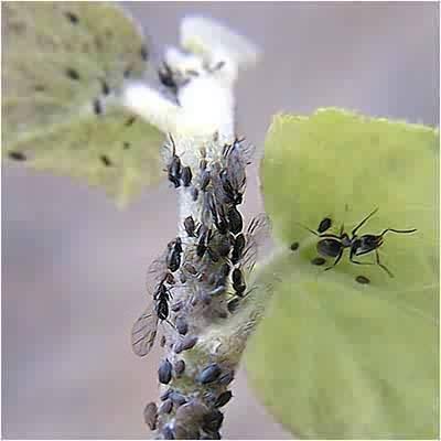 Hormigas junto a las plantas