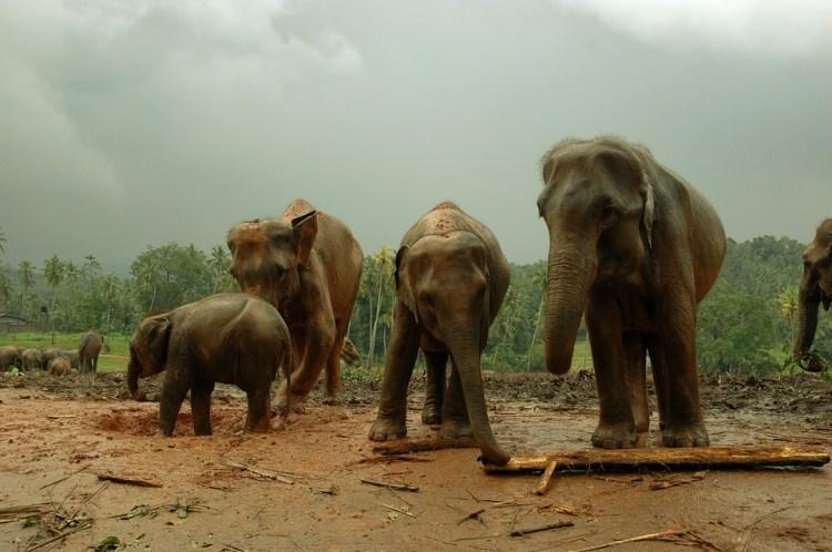 Réserve forestière de Sinharâja
