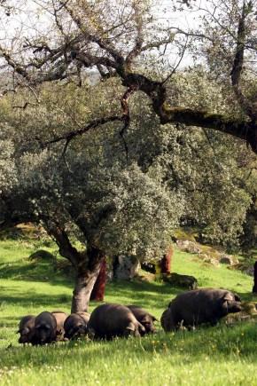 andalucia_grisehistorie_0706_landskap
