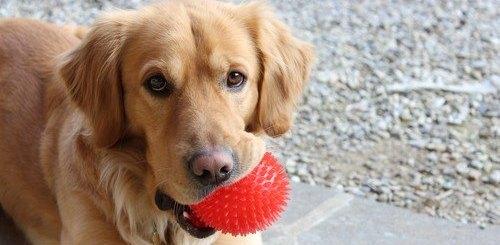 happy dog TruDog