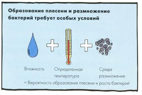 Саңырауқұлақтарды қалыптастыру шарттары