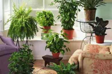 Комнатные цветы для спальни- полезные и вредные растения для спальной комнаты