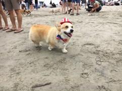 corgi_beach_day_26