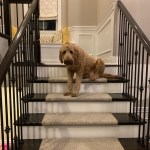 Cusomer Bristol with Pup
