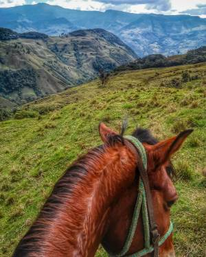 HorsebackJardin