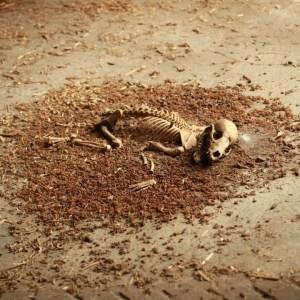 Unknown skeleton