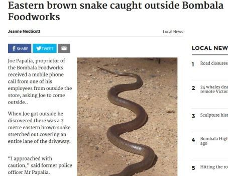 Snake Story Scott Brotherton