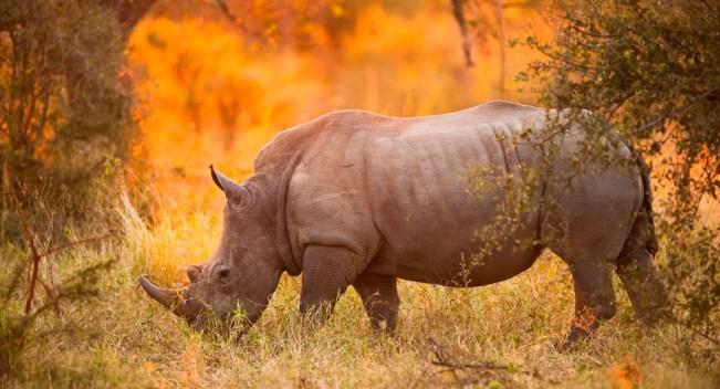 rinoceronte-parque-nacional-kruger