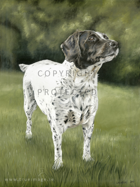 Judy's pet portrait in acrylic