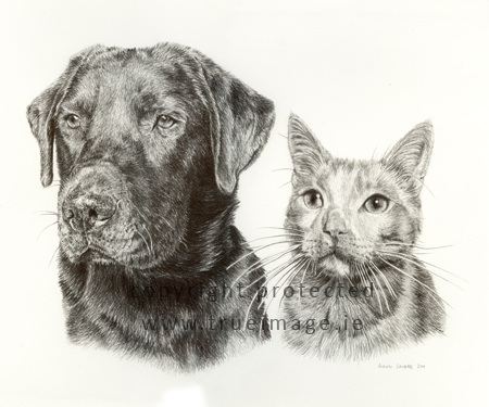 black labrador pet portrait and cat pet portrait in pencil