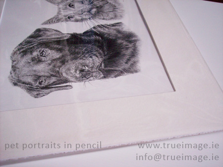 Finished pet portrait mounted and wrapped in clear plastic ready for posting