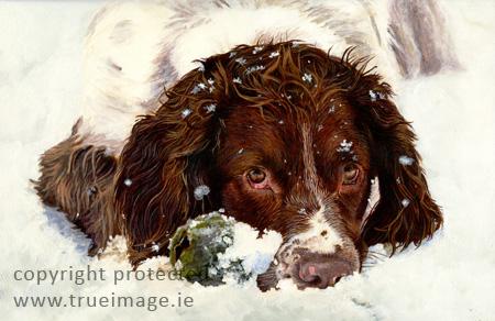 Springer Spaniel dog portrait painting