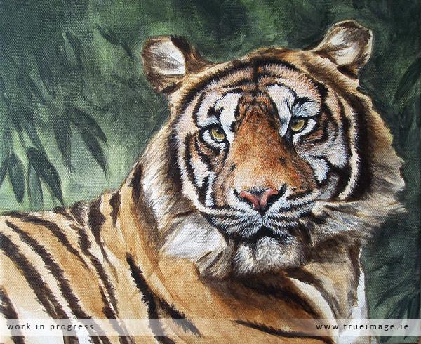 sumatran tiger painting in progress - stage 4