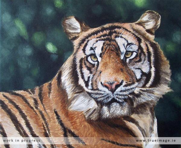 sumatran tiger painting in progress - stage 5