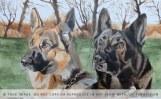 two german shepherds portrait in progress - basic colours