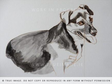dog portrait painting -work in progress 1