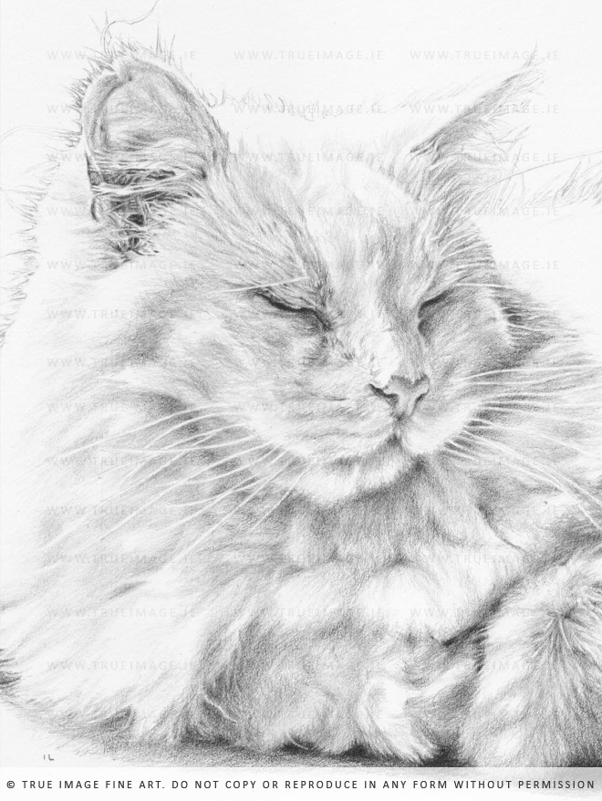 white cat portrait in pencil