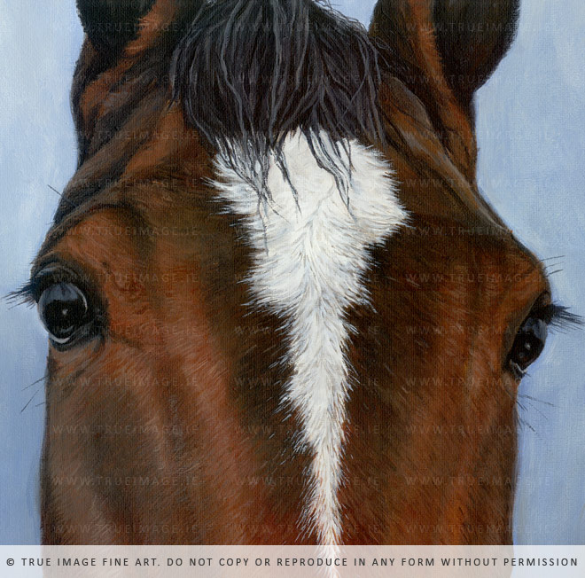 horse portrait detail