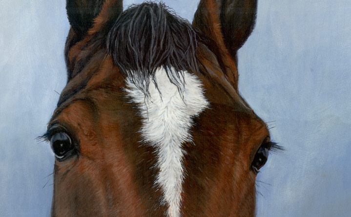 A brand new horse portrait of Arlie