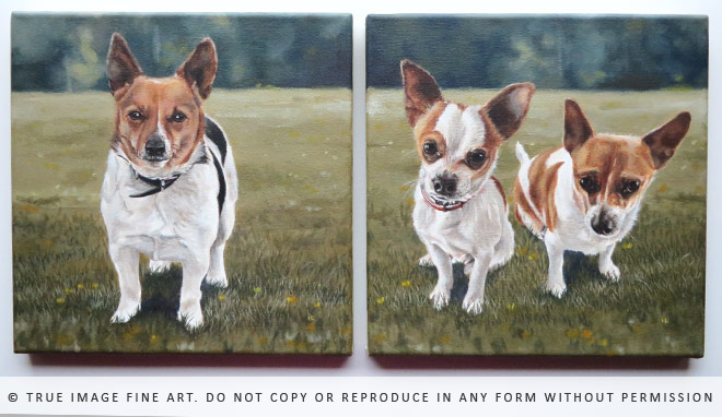 jack russell and chihuahua paintings