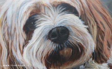 acrylic painting of a cavachon