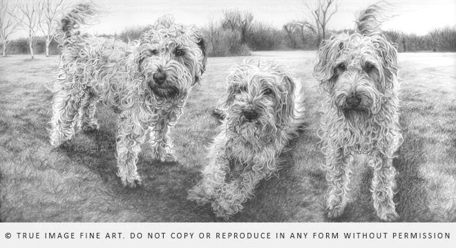 three wheaten terriers drawing