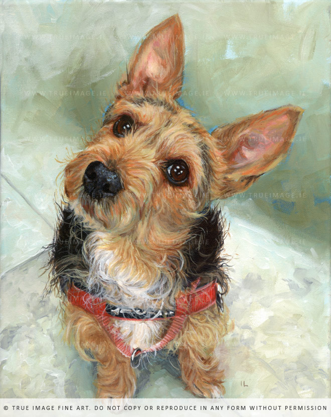 brown black terrier dog portrait