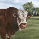 bull detail