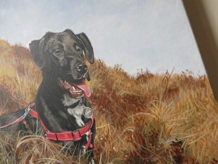 detail of a dog portrait