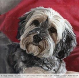 yorkie dog painting progress