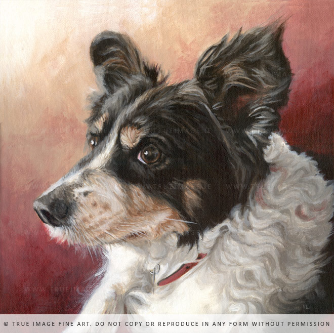 black white brown collie painting canvas