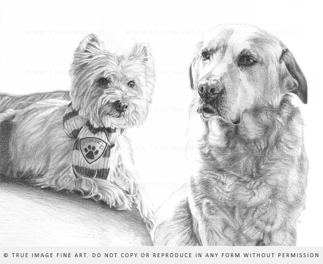 yorkie and labrador drawing