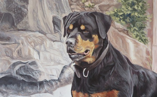 rottie portrait