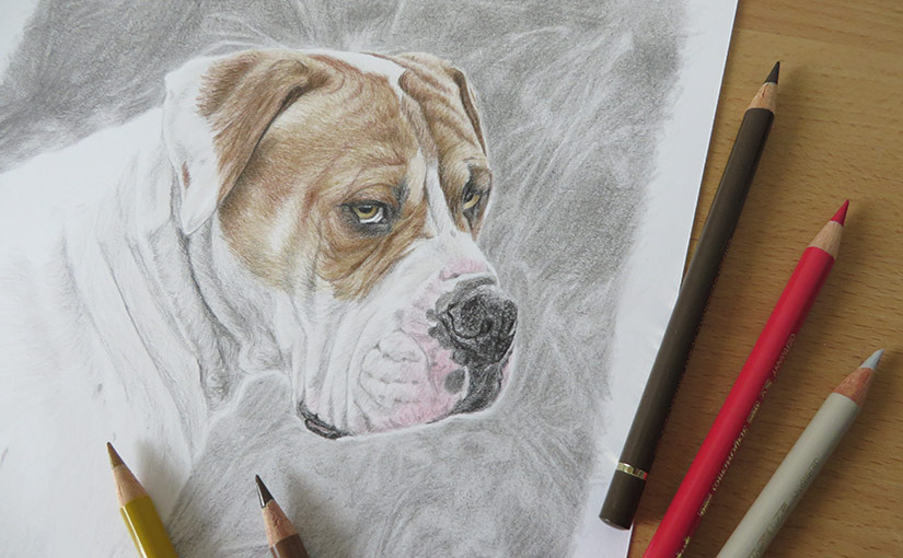 drawing of a boxer dog