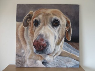 golden lab retriever in acrylic