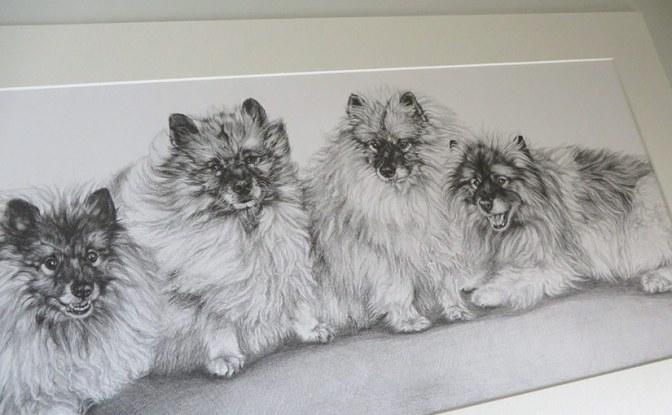 dog pencil portrait