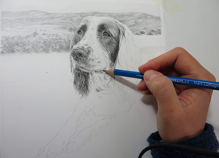 dog drawing progress