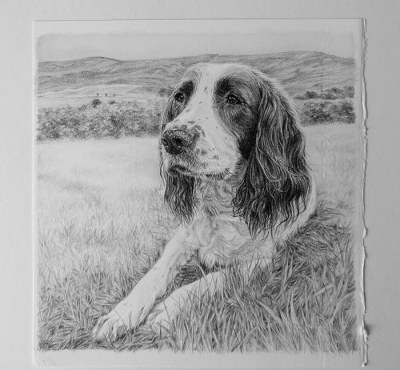 dog portrait drawing