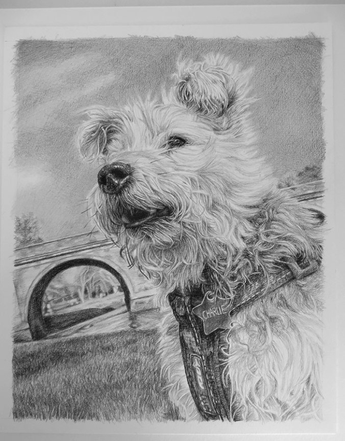 dog drawing on paper
