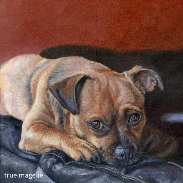tan jack russell dog portrait painting